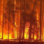 Los incendios forestales de interfaz. Las catástrofes que se nos vienen.