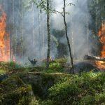 Un nuevo esquema de prevención de incendios forestales para Chile.