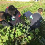 Importancia y viabilidad de la agroecología