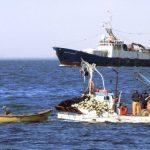 Sector pesquero artesanal apoya incondicionalmente uso de potera para la captura de la jibia