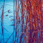 Los peligros de los pantanos