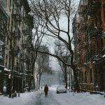Árboles urbanos y su sana expansión: conflictos que obligan a normar