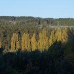 Paradigmas y neo paradigmas de las plantaciones forestales chilenas. Un debate necesario ad-portas de cambios fundamentales