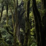 Aclarando algunas cosas respecto de las supuestas bondades del actual modelo forestal vigente
