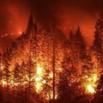 LOS BOSQUES Y LA VULNERABILIDAD POR LA CRISIS CLIMÁTICA