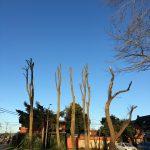 Ley de Arbolado Urbano: ciudades inclusivas, seguras, resilientes y sostenibles