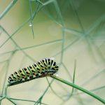 Insectos, ¿el alimento del futuro?