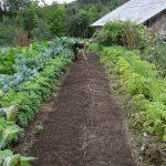 Asociatividad y cooperativismo: una oportunidad para repensar la alimentación del futuro